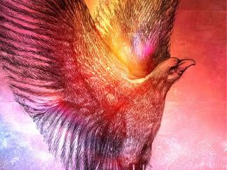 Gagart-phoenix-portfolio